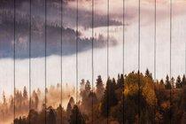 Лесной пейзаж 60х90 см, 60x90 см - Dom Korleone