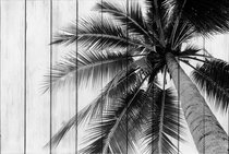 Пальма 30х40 см, 30x40 см - Dom Korleone