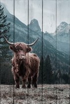 Шотландский бык 30х40 см, 30x40 см - Dom Korleone