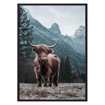 Шотландский бык, 21x30 см - Dom Korleone