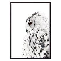 Белая сова, 21x30 см - Dom Korleone