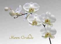 Подставки на пробке Лунная орхидея 40х29 см(4шт) - Top Art Studio